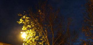 alberi luce artificiale