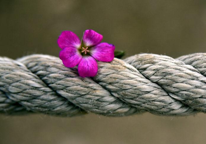 canapa corda erba
