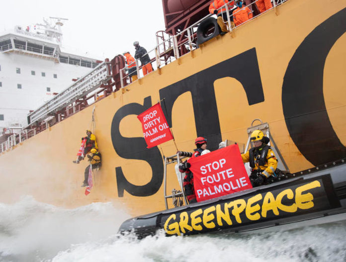 rotterdam olio palma greenpeace