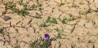 desertificazione aridità clima