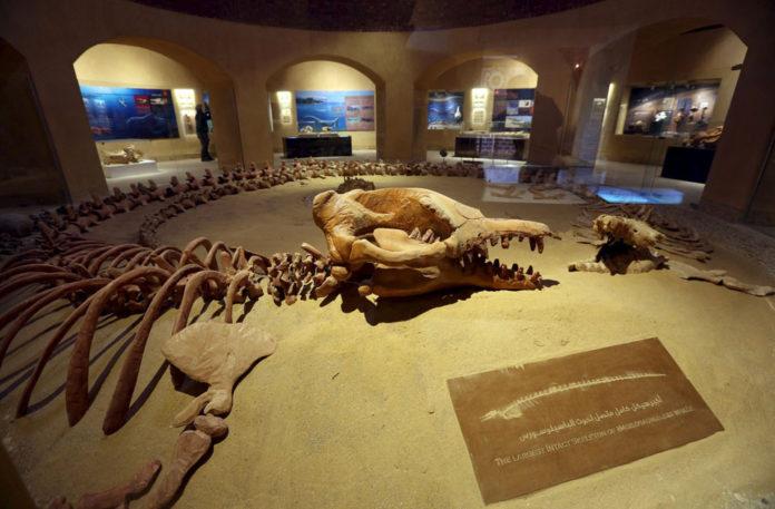 Basilosauro1