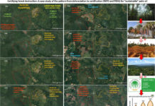 Certifying forest destruction_Palm oil