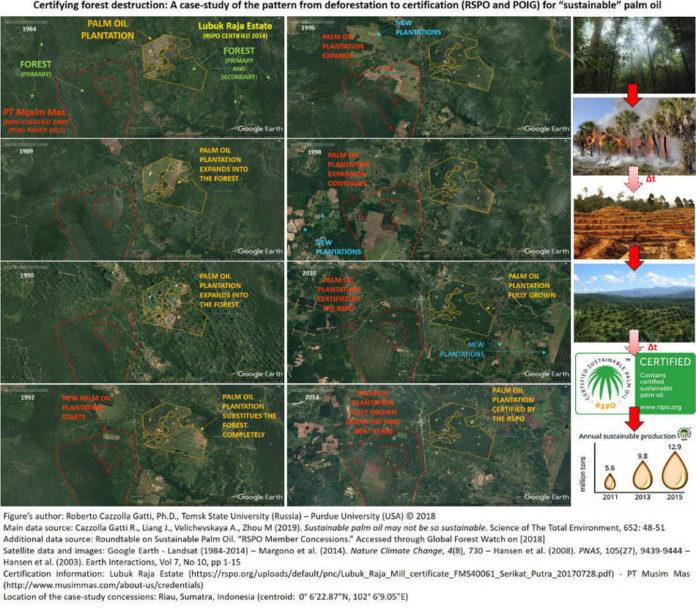 Certifying forest destruction_Palm oil
