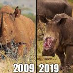 rinoceronte campagna wwf