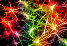 sinapsi cervello neuroni