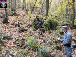 carabinieri forestale Vernio