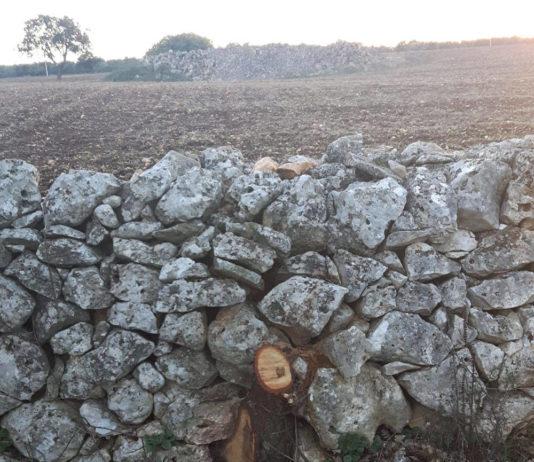 murgia cassano forestale