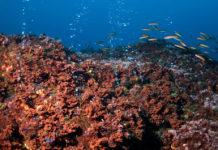 oceano mare greenpeace