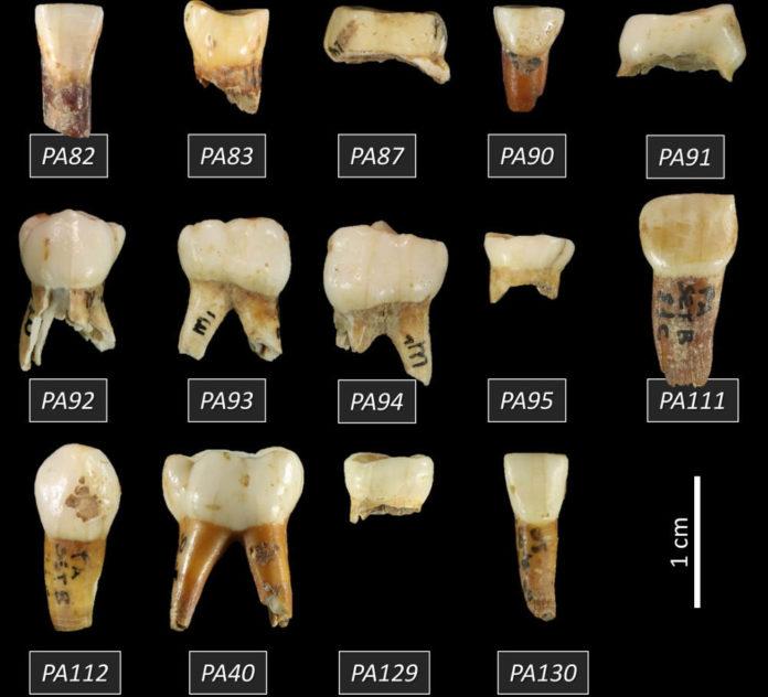 Grotta Paglicci Gargano denti