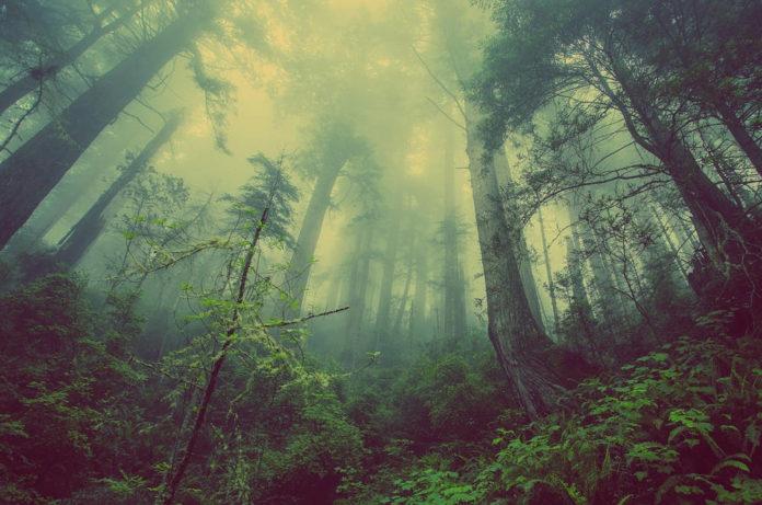 foresta resilienza 86