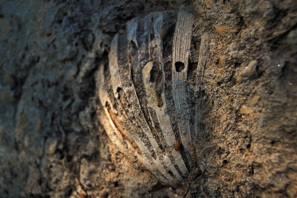 Sergio De Tullio: Conchiglia fossilizzata