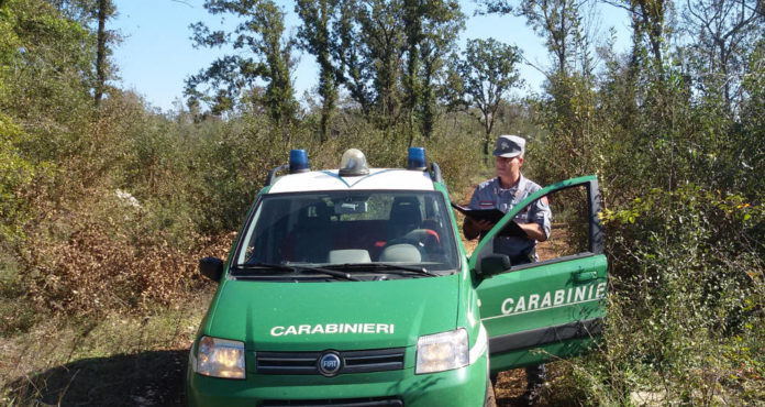 carabinieri forestali bari