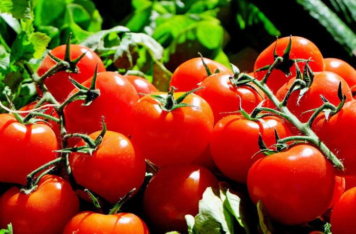 pomodori campagna agricoltura