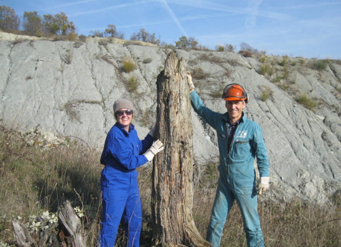 Campionamento albero fossile Savona Sahra Talamo Mike Friedrich