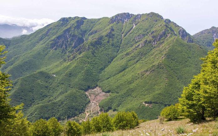 Pollino Montea Taglio orribile nei Monti Orsomarso