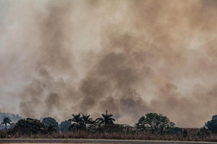 GP incendio amazzonia