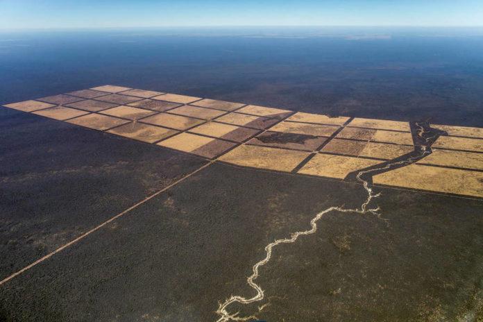 Gran chaco allevamenti deforestazione