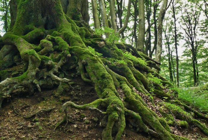 wilderness natura albero