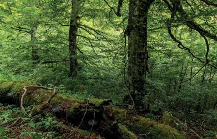 foreste legambiente