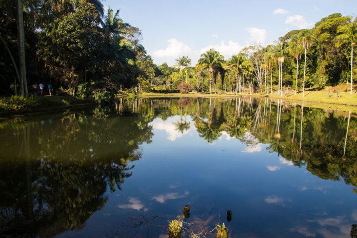 Amazzonia 88