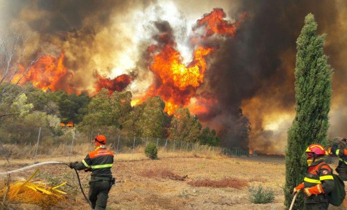 Leone incendi