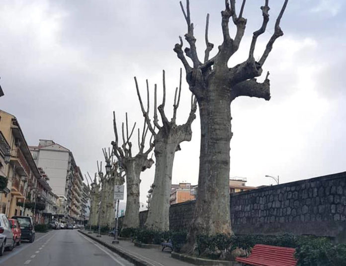 alberi potature