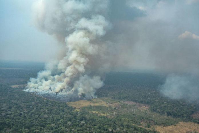 amazzonia deforestazione greenpeace