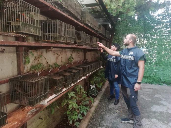 cites uccelli sequestrati