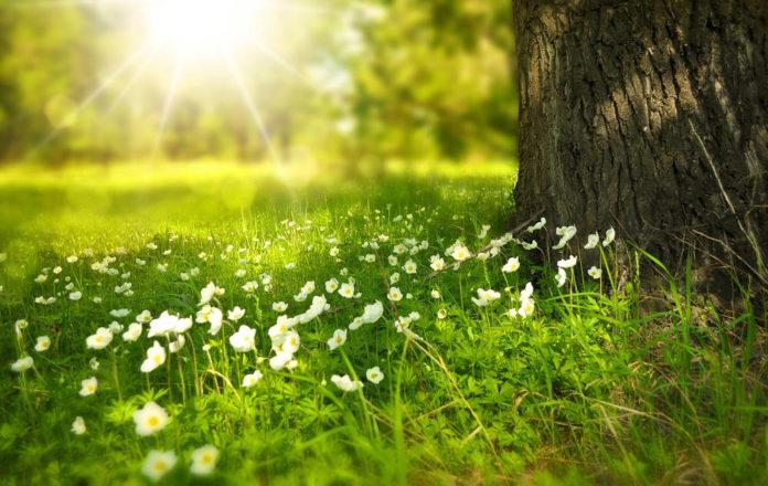 decrescita natura Image by Larisa Koshkina from Pixabay