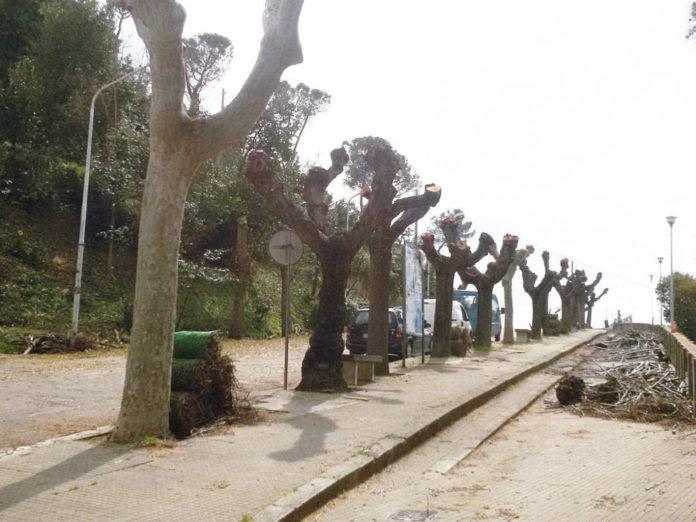 alberi capitozzatura viale citta