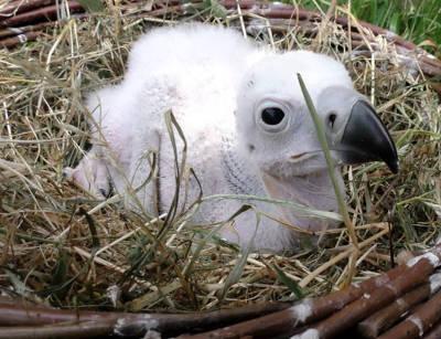 Pulcino nato negli anni precedenti al Parco Natura Viva