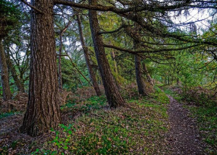 bosco foresta alberi 89
