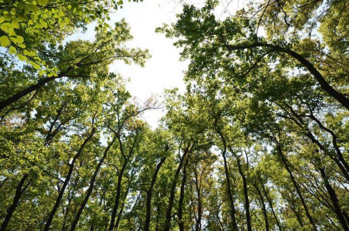 bosco ossigeno 89
