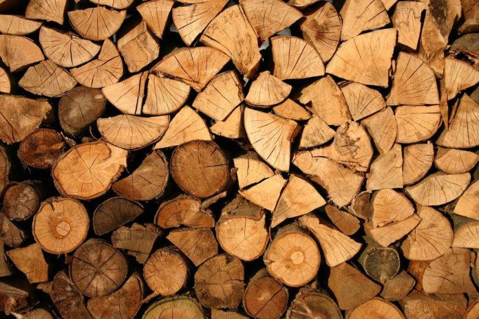 bosco taglio violenza 89