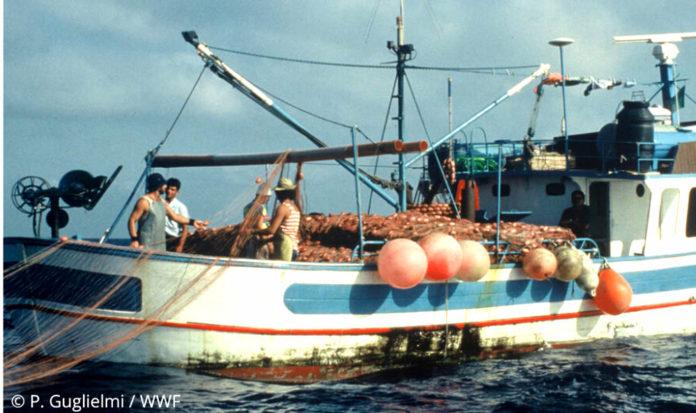 pesca © P.Guglielmi _WWF