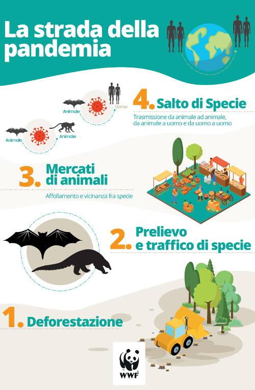 WWF-Pandemia-infografica