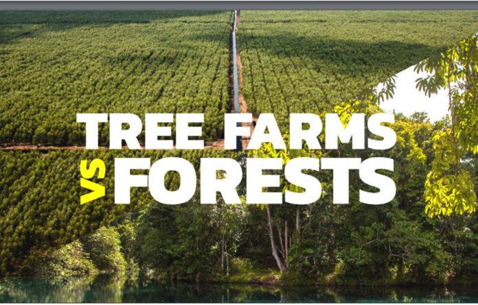 gp foreste monocolture