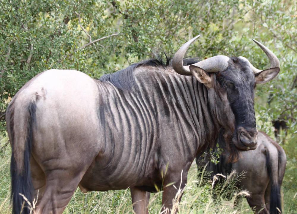 cazzolla parco sudafrica