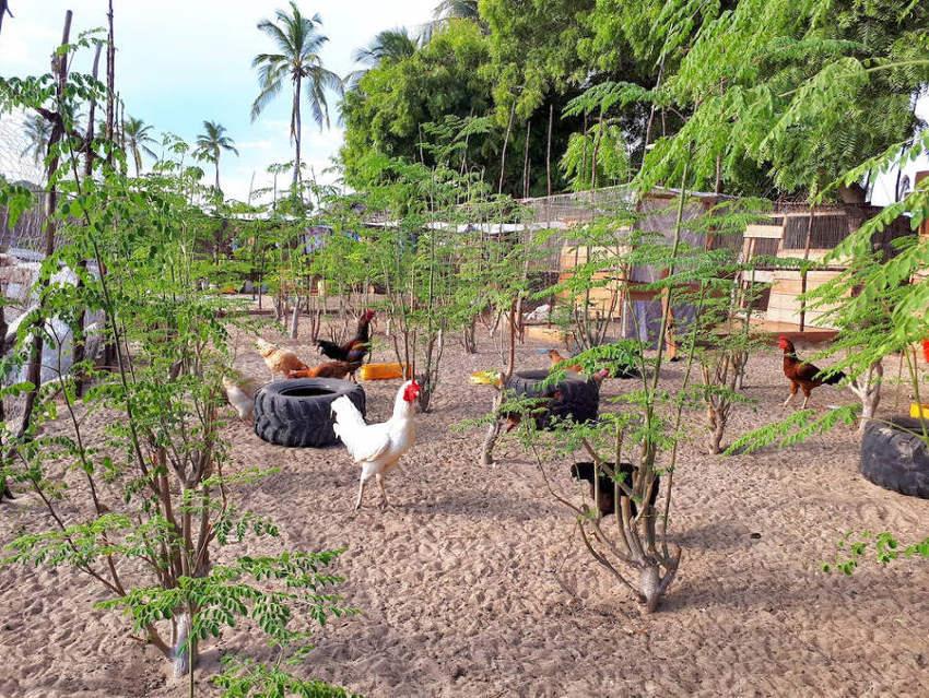 Green World Food Garden For Kids 4