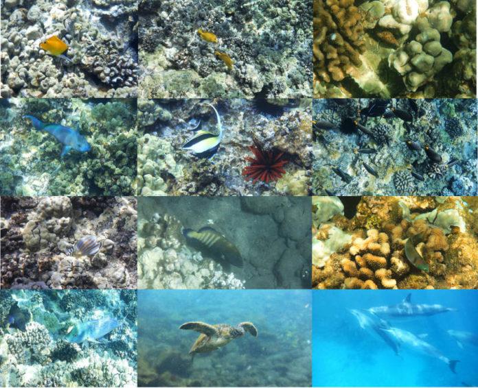 La straordinaria biodiversità della barriera corallina delle Hawaii Photo credits Roberto Cazzolla Gatti ©