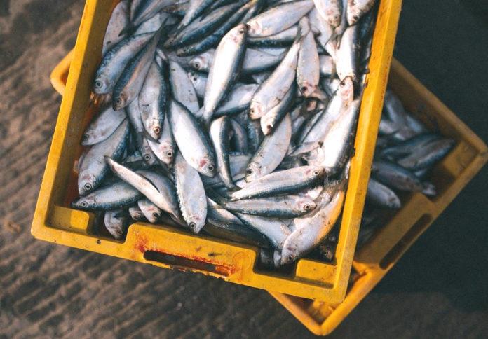 cassetta pesce 90