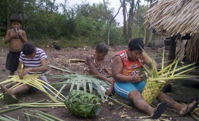Arara Brasile Amazzonia