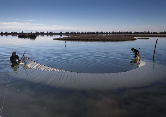 laguna venezia pesca