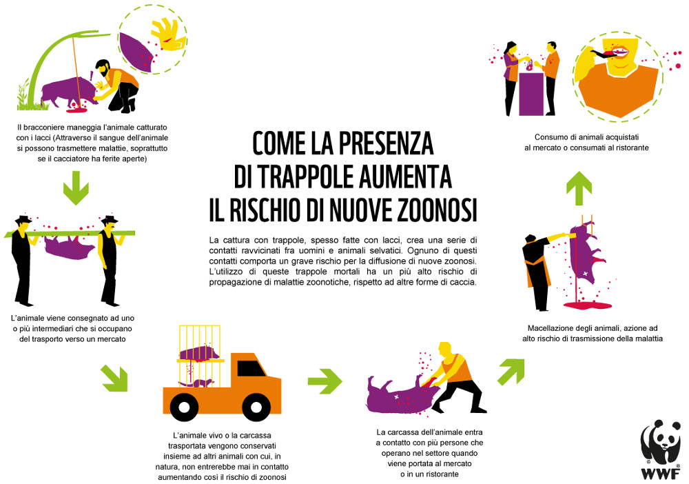 Infografica Zoonotic Risks Snaring Crisis