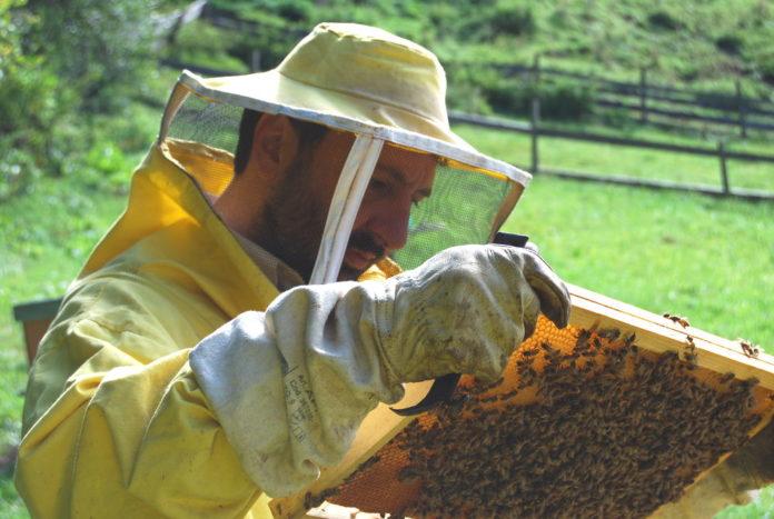 Sergio Angeli apicoltore api