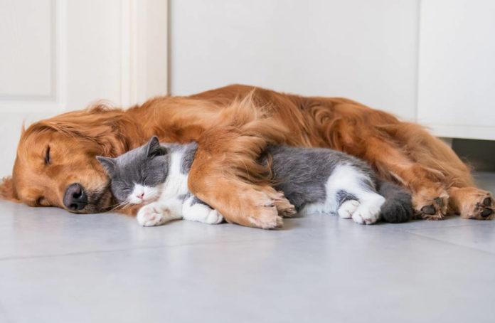 cane gatto pet 91