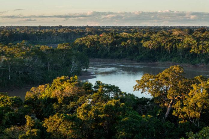 The rainforest canopy. Tambopata, Peru.