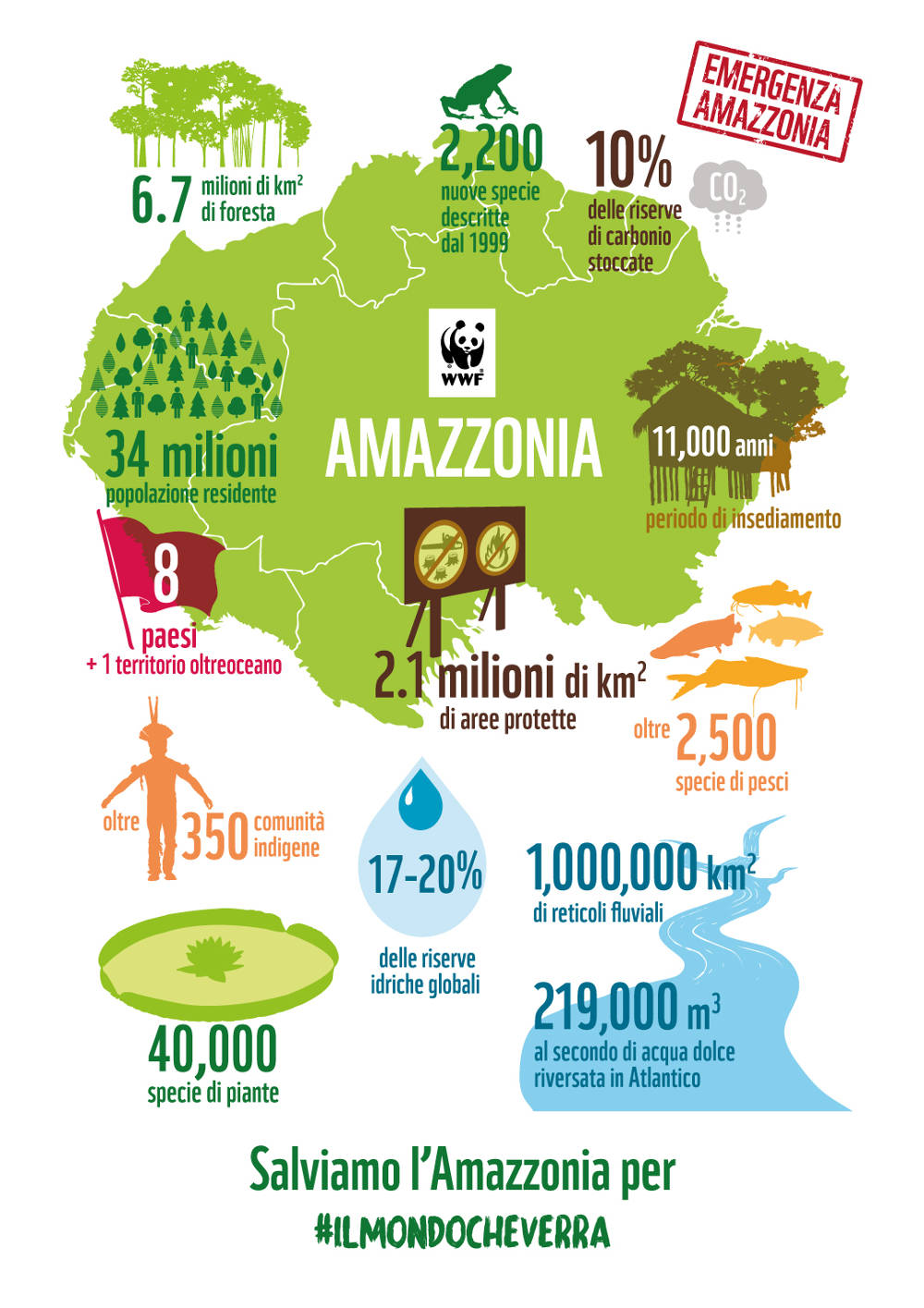 1.-Infografica-Amazzonia