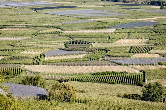 mele alto adige Apfelplantagen im Vinschgau (Jörg Farys)