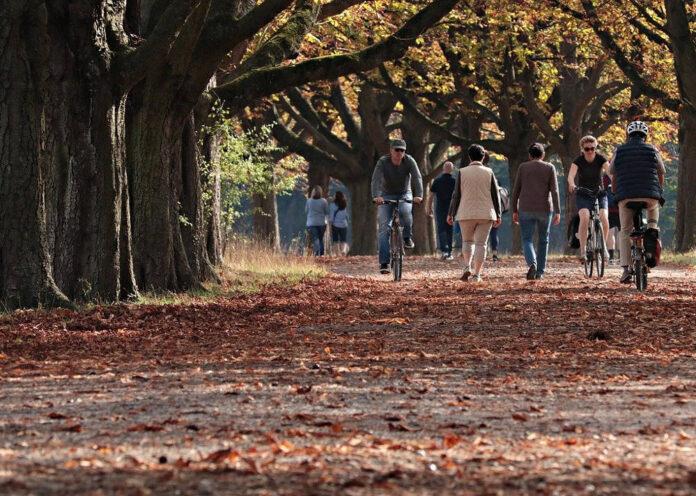 toscana, alberi, viale, biciclette, qualità, aria